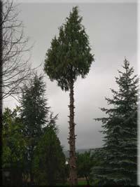 Le d montage d 39 un arbre page 2 2 for Prix de l elagage d un arbre
