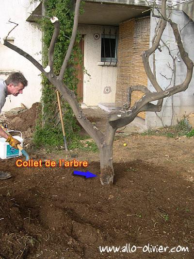 la plantation et la transplantation d 39 un arbre ou comment bien planter un arbre page 4 4. Black Bedroom Furniture Sets. Home Design Ideas