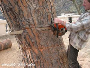 Comment abattre un arbre tronc petit et gros diam tre for Prix de l elagage d un arbre
