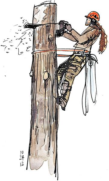 Le d montage d 39 un arbre en lagage page 1 2 for Prix de l elagage d un arbre