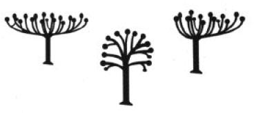forum jardin au naturel tailles des arbres. Black Bedroom Furniture Sets. Home Design Ideas
