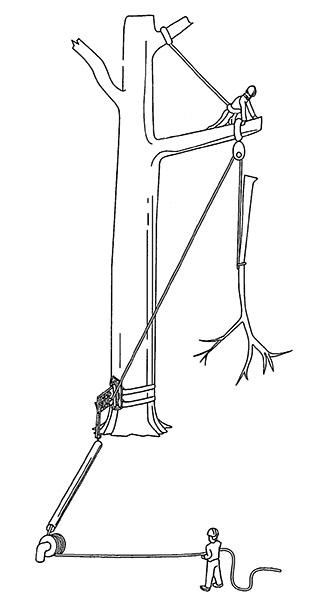 comment abattre un arbre fabulous comment abattre un arbre avec corde with comment abattre un. Black Bedroom Furniture Sets. Home Design Ideas