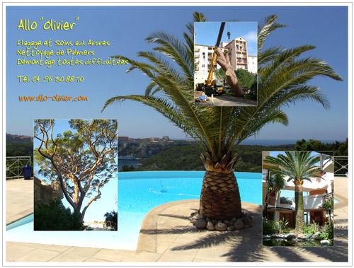 Allo Olivier Photos Forum