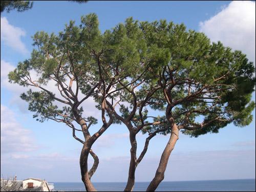 le forum des arboristes grimpeurs des grimpeurs d 39 arbres des b cherons et des cordistes ou. Black Bedroom Furniture Sets. Home Design Ideas