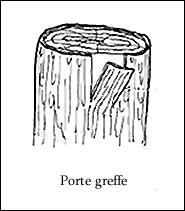 Index of photos forum tutos for Porte greffe