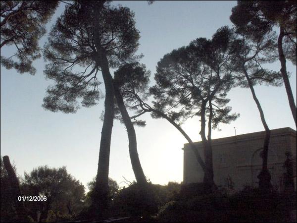 http://www.allo-olivier.com/Photos-Forum/Vos-Photos/ElMero/Pins-Alep-01.jpg