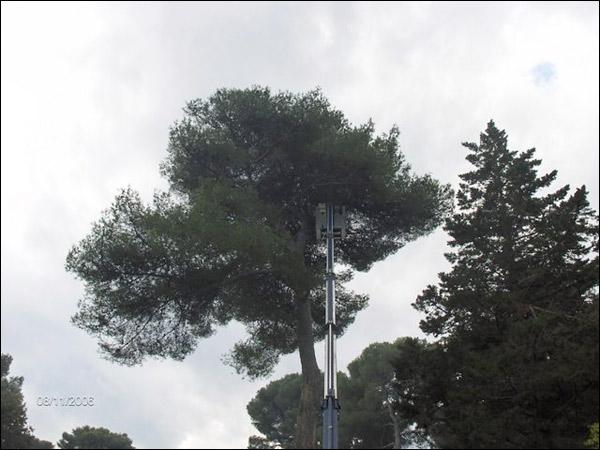 http://www.allo-olivier.com/Photos-Forum/Vos-Photos/ElMero/Pins-Alep-02.jpg