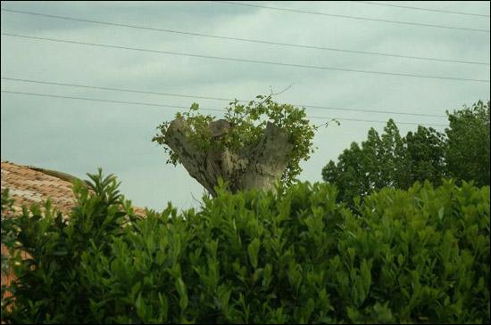 http://www.allo-olivier.com/Photos-Forum/Vos-Photos/marc07/Platane-03.jpg